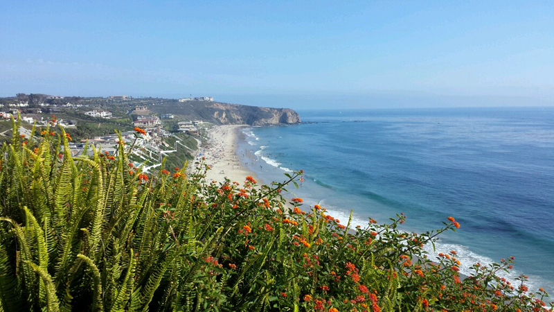 And Mother Nature cooperated beautifully with flowers the same color as the wedding decorations along the cliffside.